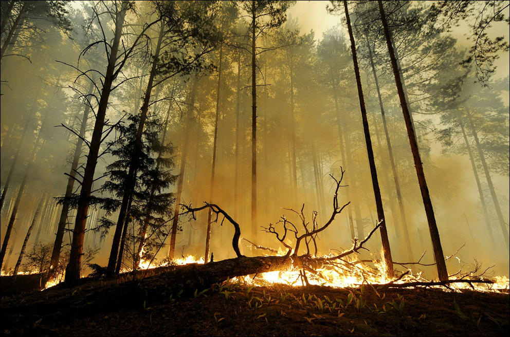 russia-forests-in-fire-35